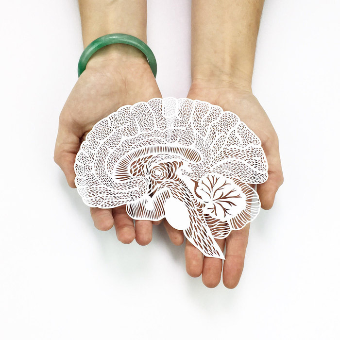 Intricate Hand Cut Anatomical Paper Illustrations by Ali Harrison