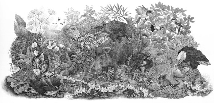 Stunningly Detailed Nature-Inspired Drawings by Zoe Keller
