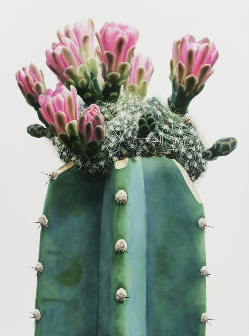 Hyperrealistic Cactus Paintings by Kwang-Ho Lee